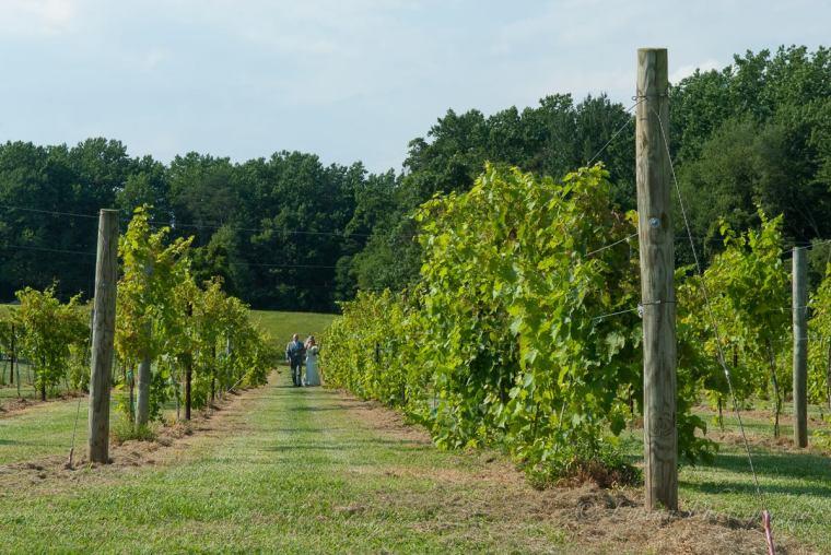 Linton vineyard the aisle walk