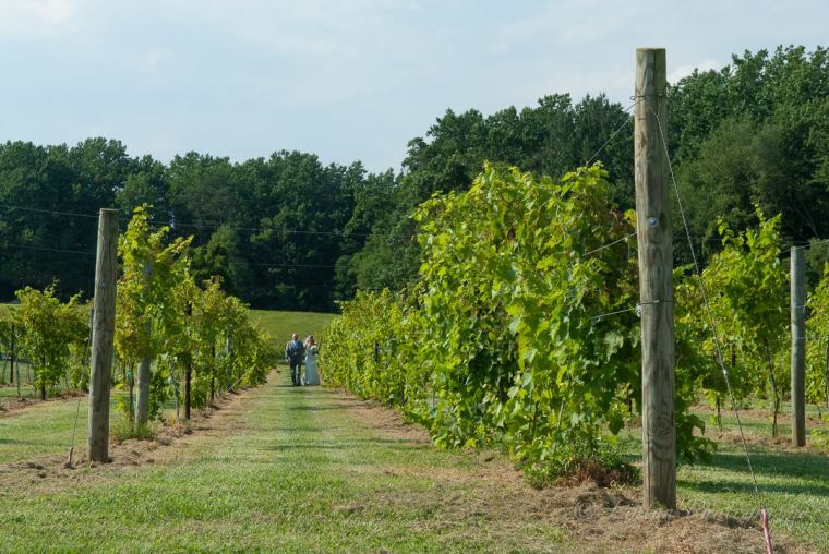 Linton vineyard the aisle walk